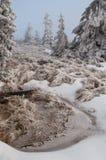 Замороженная пуща Стоковая Фотография RF