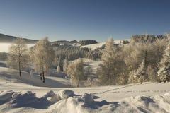 замороженная пуща Стоковые Фотографии RF