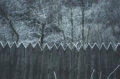 замороженная древесина Стоковое Изображение