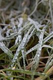 Замороженная роса утра на листьях травы стоковое изображение rf