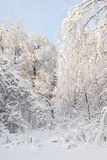 Замороженная сказка Стоковая Фотография RF
