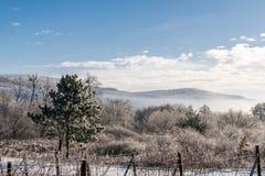 Замороженная страна виноградника Стоковое Изображение