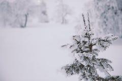 Замороженная страна чудес Стоковые Фото