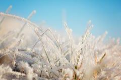 Замороженная трава на голубом небе Backgound Зима Стоковое Изображение RF