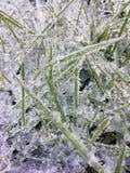 Замороженная трава на утре зим стоковое изображение