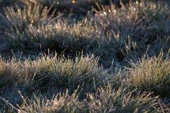 Замороженная трава рано утром на восходе солнца Стоковое Фото