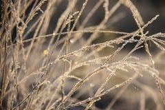 Замороженная трава с hoarfrost стоковое фото