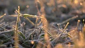 замороженная трава сток-видео