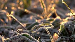 замороженная трава видеоматериал