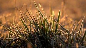 замороженная трава акции видеоматериалы