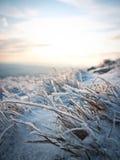 замороженная трава Стоковые Фотографии RF