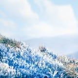 замороженная трава Стоковые Изображения RF