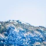 замороженная трава Стоковое Изображение