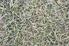 замороженная трава Стоковое фото RF