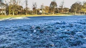 замороженная трава Стоковая Фотография RF