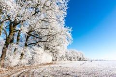 Замороженная тропа на снежном луге рядом с немногими деревьями Стоковая Фотография