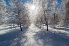 Замороженная ферма дерева Стоковое Изображение