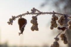 замороженная хворостина Стоковое Фото