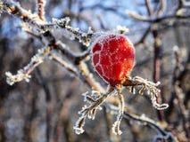 Замороженное бедро Стоковые Изображения