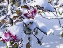 замороженное время Стоковая Фотография RF