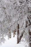 замороженное время Стоковое Изображение