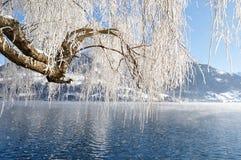 Замороженное дерево Стоковые Фото
