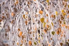 Замороженное дерево в зиме с изморозью Стоковая Фотография