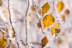 Замороженное дерево в зиме с изморозью Стоковые Фотографии RF