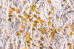 Замороженное дерево в зиме с изморозью Стоковые Изображения RF