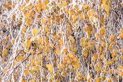 Замороженное дерево в зиме с изморозью Стоковая Фотография RF