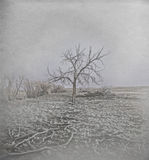 Замороженное дерево в Horr Frost Стоковое фото RF