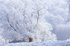 Замороженное дерево с ландшафтом зимы снега волшебным Стоковые Изображения
