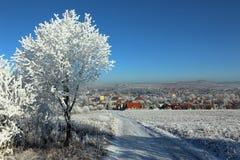 Замороженное дерево 01 Стоковые Фото