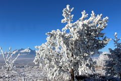 Замороженное дерево 03 Стоковые Фото