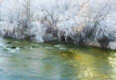 замороженное золотистое Стоковые Фотографии RF