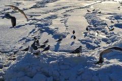 Замороженное море Стоковое Изображение RF