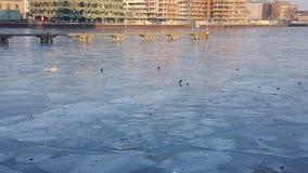 Замороженное оживление реки в Берлине стоковые фото