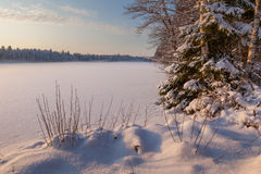Замороженное озеро зимы в древесине под снежком стоковое изображение