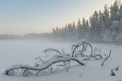 Замороженное озеро зимы в древесине под снежком стоковое изображение rf