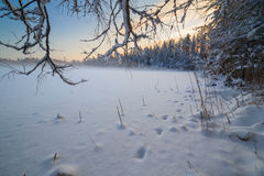 Замороженное озеро зимы в древесине под снежком стоковая фотография rf