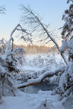 Замороженное озеро зимы в древесине под снежком Стоковое фото RF