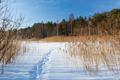Замороженное озеро с человеческими шагами Стоковые Фото