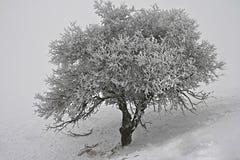 Замороженное одиночество Стоковое Изображение RF