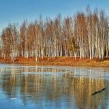 Замороженное падение Стоковые Изображения RF