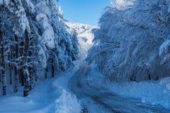 Замороженное пересечение дорог снежный лес Стоковое фото RF