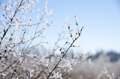 Замороженное поле около улицы Ne 124 в Kirkland Стоковые Изображения