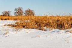 Замороженное река с сухой тросточкой на острове Стоковые Фотографии RF