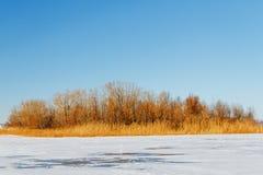 Замороженное река с сухой тросточкой на острове Стоковое Изображение RF