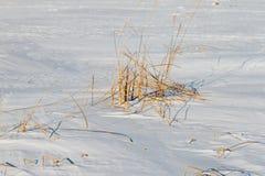 Замороженное река с сухой тросточкой на острове Стоковые Изображения
