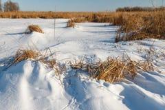 Замороженное река с сухой тросточкой на острове Стоковое Фото